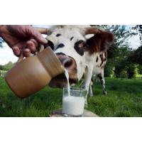 Соматические клетки молока: что это и какая норма?